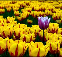 Tulips in the Valley by Kathryn  Young