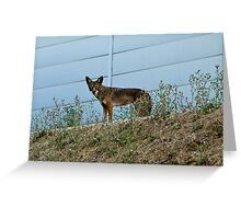 The wild side of the fence Greeting Card