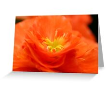 Begonia fire Greeting Card