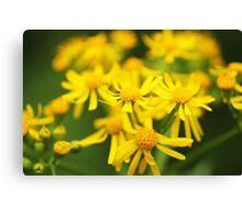 Yellow Flowers Canvas Print