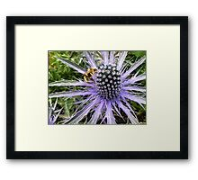 Sea Holly - Blue Glitter Framed Print