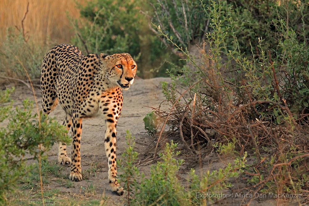 Into the light by Explorations Africa Dan MacKenzie
