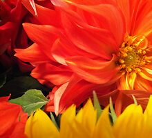 Dahlia by Julie Van Tosh Photography