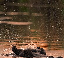 Comin up for air! by Explorations Africa Dan MacKenzie