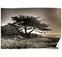 Cypress On The Coast Poster