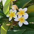 Frangipani iPhone Case by Patrick Forrest