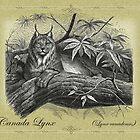 Lynx by Beesty