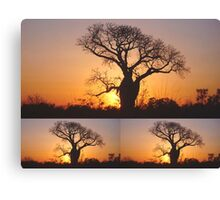 Collage of Three Boab Trees at Sunset Canvas Print
