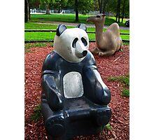 Sandbox Panda Photographic Print
