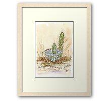 Cactus Trichocereus Framed Print