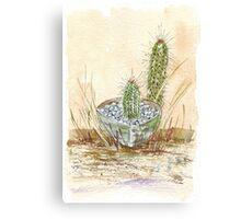 Cactus Trichocereus Canvas Print