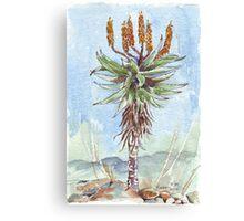 Aloe ferox painting 2 Canvas Print