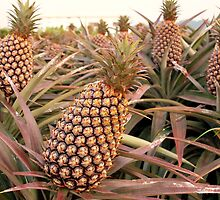 Large Pineapple Fruits by fotogenicdesign
