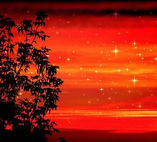 Morning Star Light © by Dawn M. Becker
