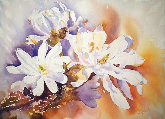 Magnolia Stellata by Ruth S Harris