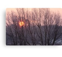 Winter sun through willow trees Canvas Print