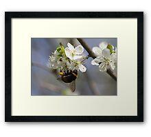 Bee In Spring Framed Print