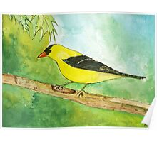Michigan Finch Poster