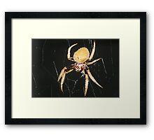 Seven-legged spider Framed Print