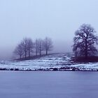 Winter Trees by Bel Menpes