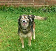 O Happy Dog ! by Vivian Eagleson