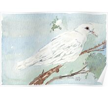 Little White Dove painting Poster