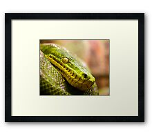 Snake Eye Framed Print