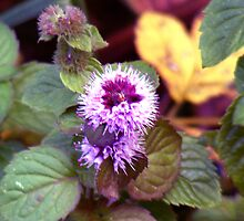 Thistle and leaves by Chris  Hayworth