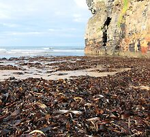 ballybunion beach cliff seaweed by morrbyte