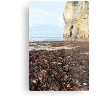 ballybunion beach cliff seaweed Metal Print