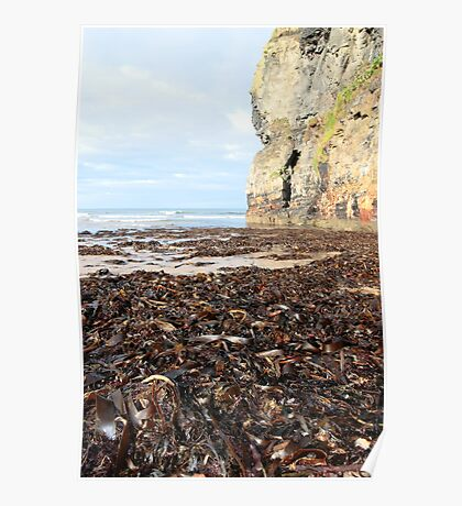 ballybunion beach cliff seaweed Poster