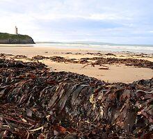 ballybunion seaweed by morrbyte