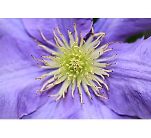 Contrasting colours Photographic Print