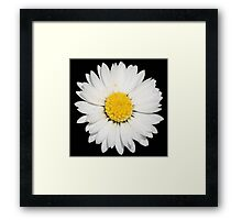 Top View of a White Daisy Isolated on Black Framed Print