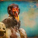 Finer Feathered Friends: Penelope, Queen of the King Vultures by alan shapiro