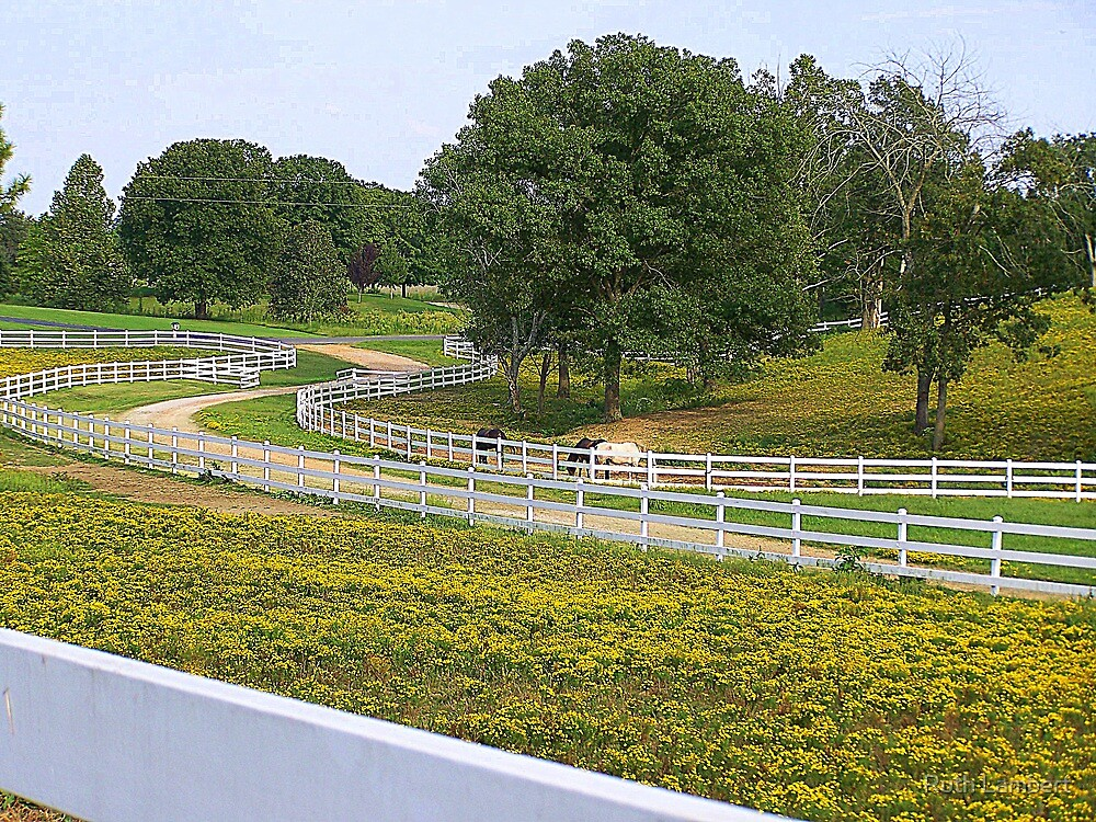 Horse Ranches.....and white fences! by Ruth Lambert
