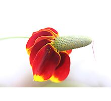Flying flower Photographic Print