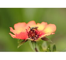 Insects bed Photographic Print