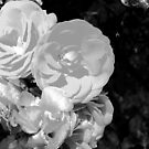 Black and white flowers by TesniJade