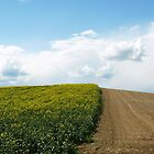 Bicolor Field by photoshot44