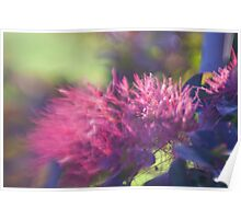 Plum Feathers Poster
