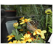 Painted Lady Butterfly On Flower Poster