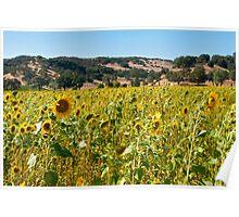 Saracina Sunflowers Poster