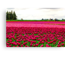 Tulip Fields Canvas Print