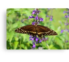 Miss Butterfly Brown Canvas Print