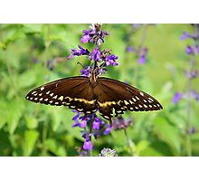 Miss Butterfly Brown Photographic Print
