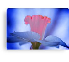 Painted Daffodil Canvas Print
