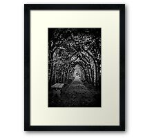 Night Shade Framed Print