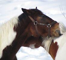 Together Forever Horses by francelal