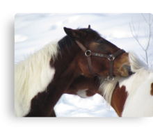 Together Forever Horses Canvas Print